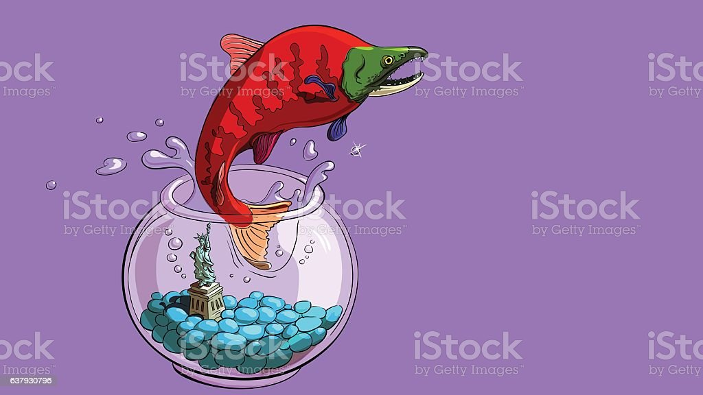 Salmon spawning and jumps out of an aquarium close vector art illustration