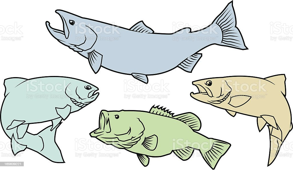 Salmon,Trout, and Bass royalty-free stock vector art