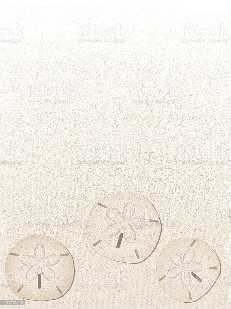 sand dollar background - portrait vector art illustration