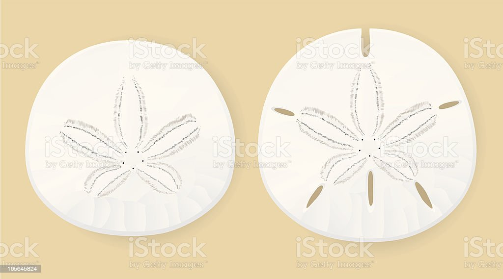 Sand Dollars vector art illustration