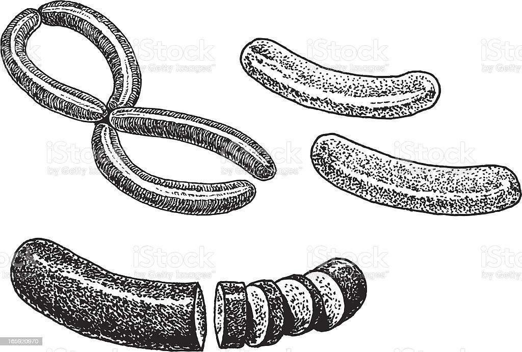 Sausage Meat vector art illustration