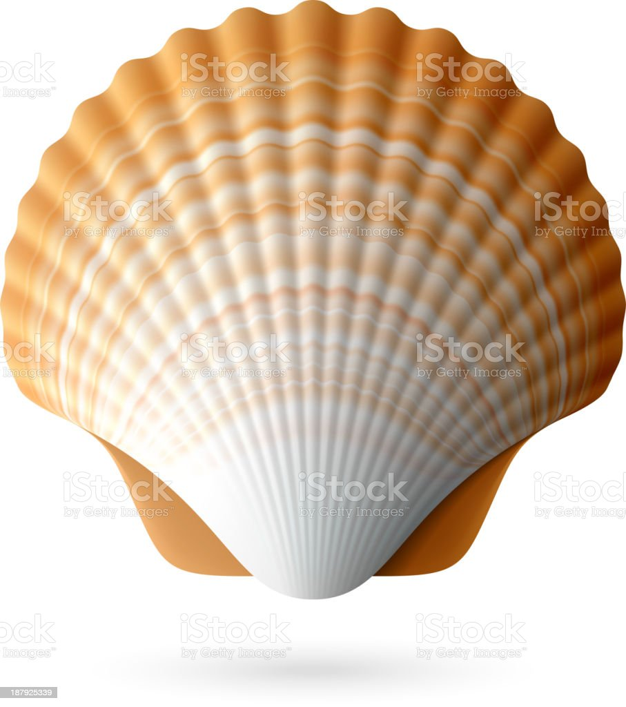 Scallop seashell vector art illustration
