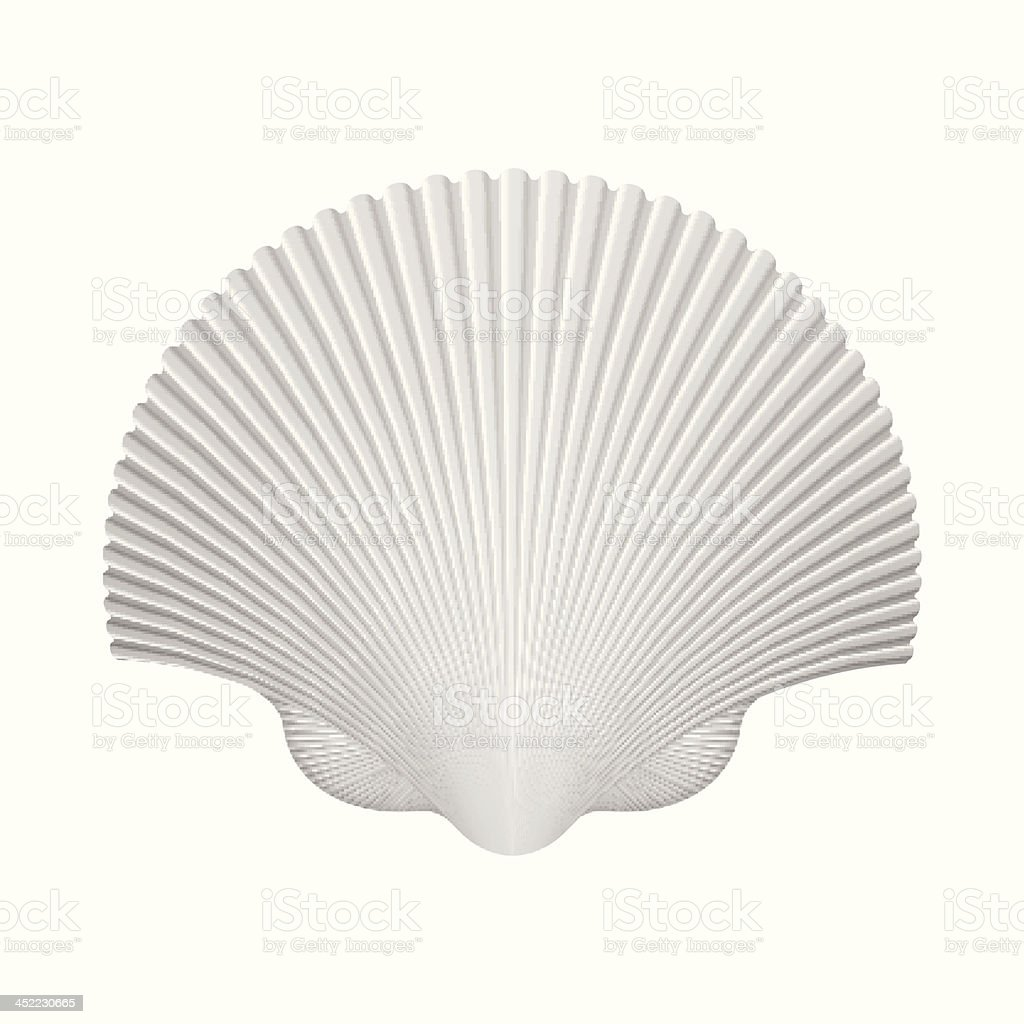 Scallop Shell. Isolated On White. Vector Illustration royalty-free stock vector art