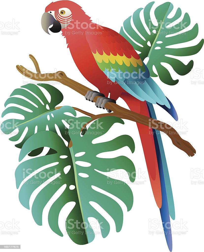 scarlet macaw and philodendron leaves vector art illustration