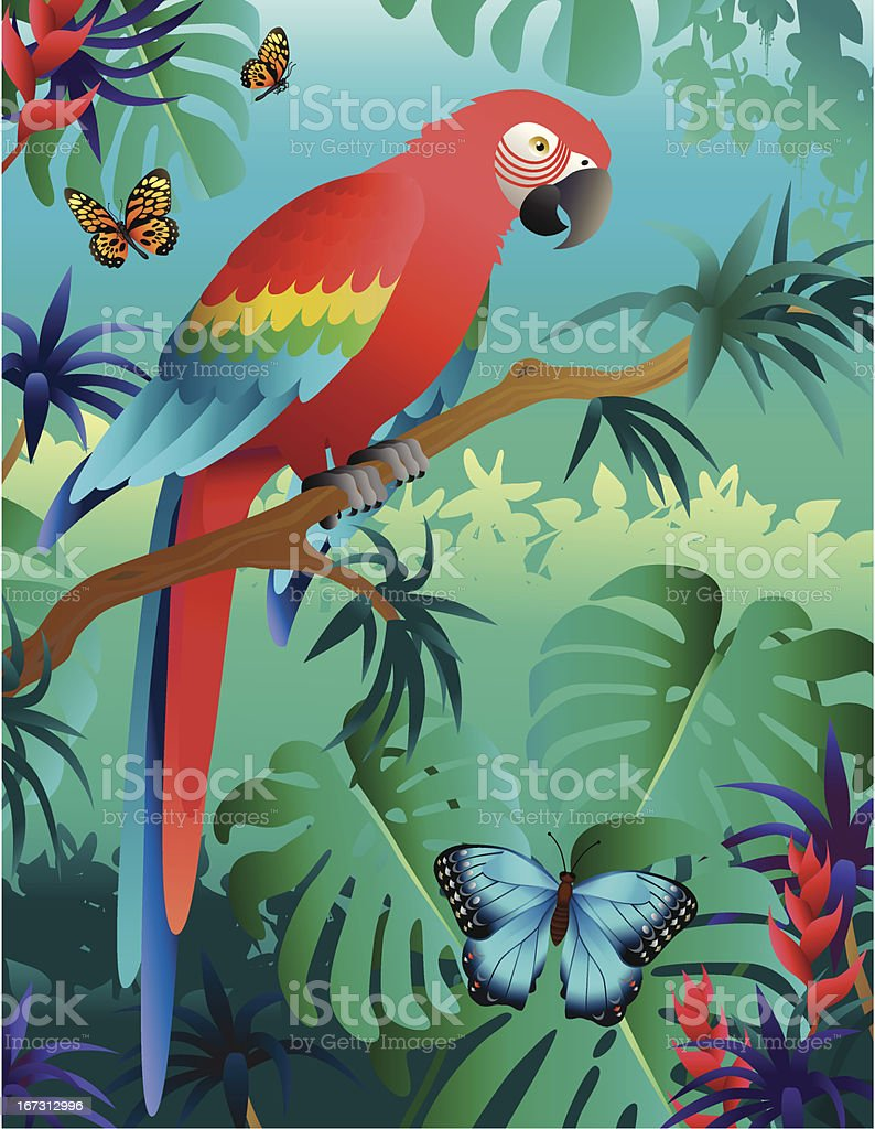 scarlet macaw  in the rainforest vector art illustration