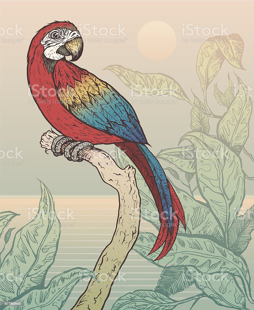 Scarlet Macaw Perched on Branch in Jungle vector art illustration