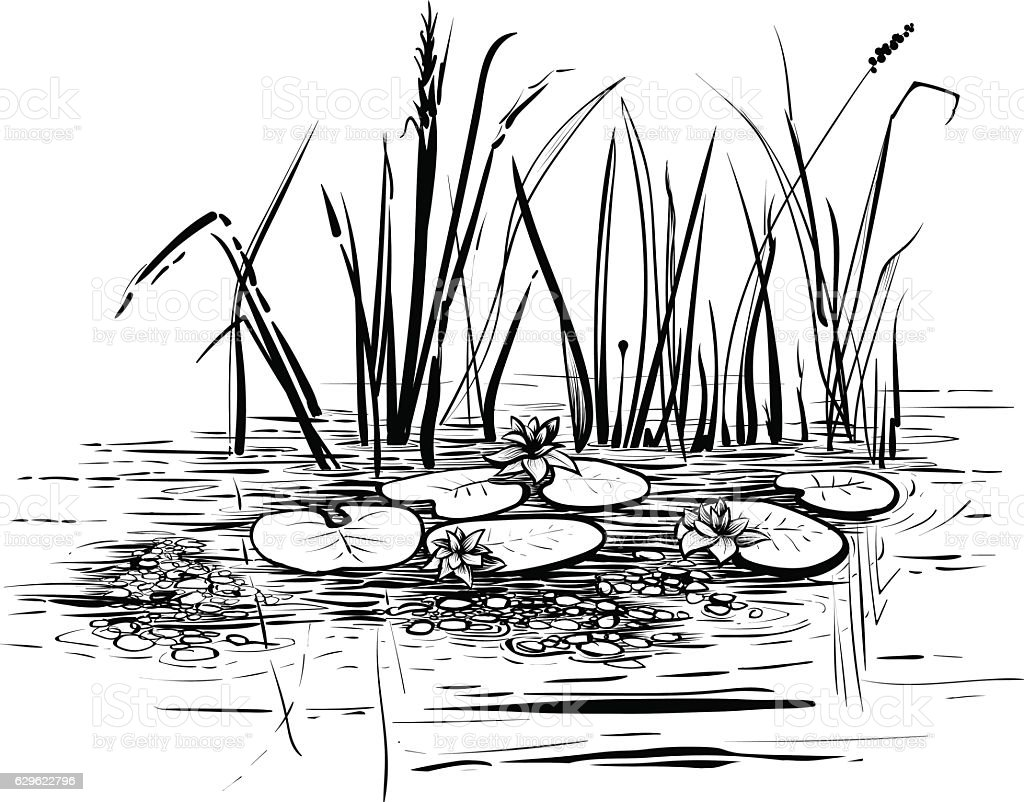 Scene with lotus and reeds in the pond or river. vector art illustration