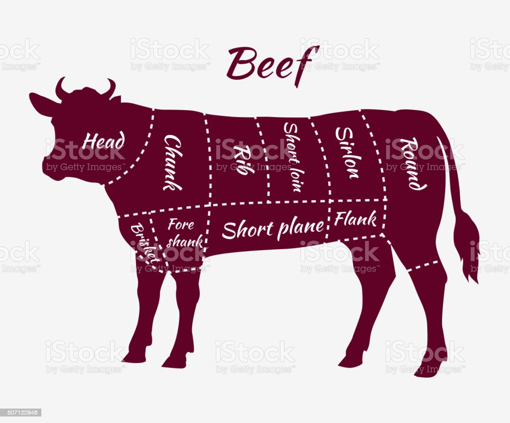 Scheme of Beef Cuts for Steak and Roast vector art illustration