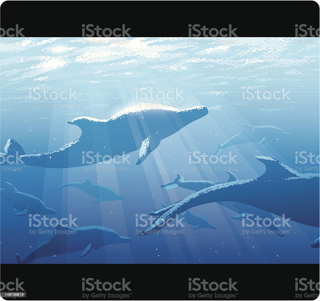 School of Dolphins royalty-free stock vector art