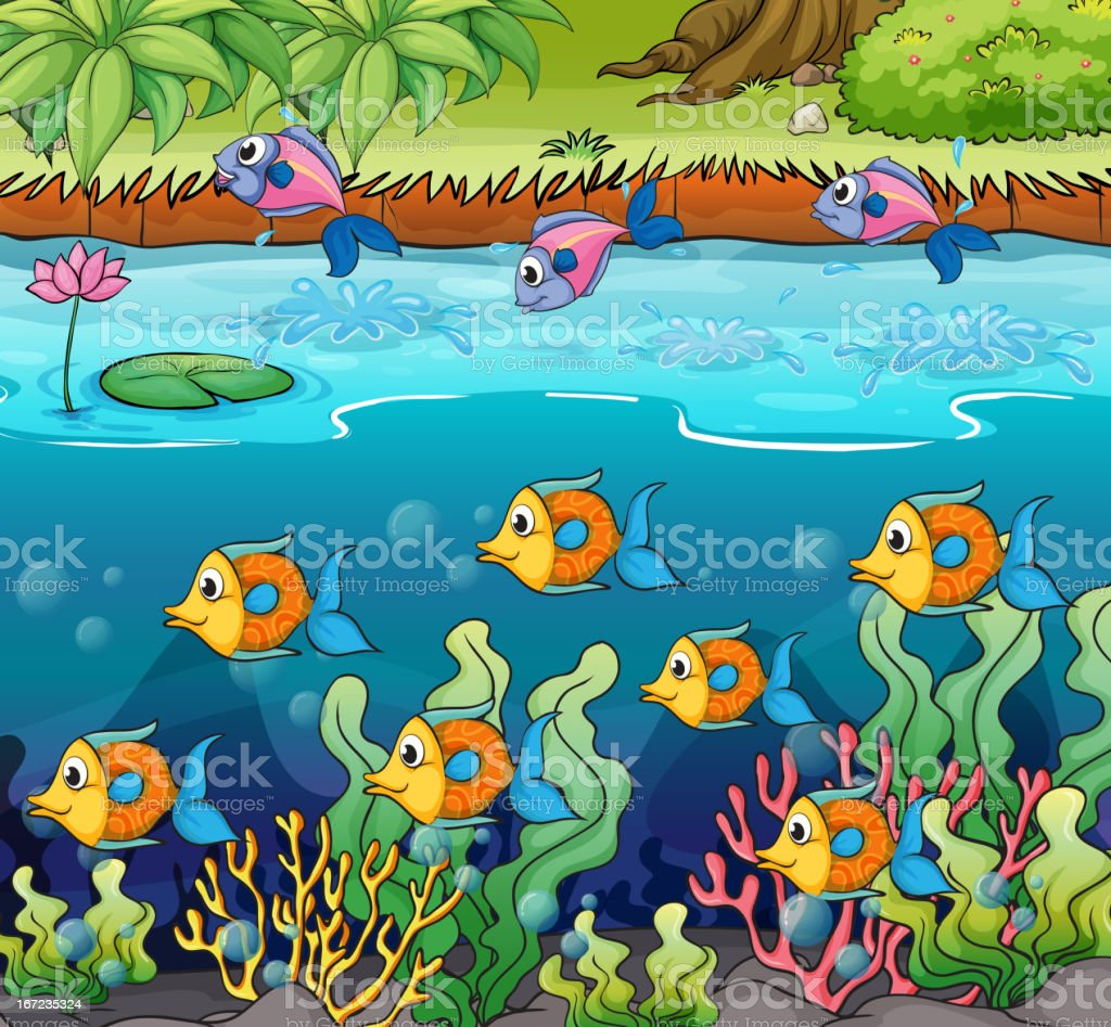 School of fish royalty-free stock vector art