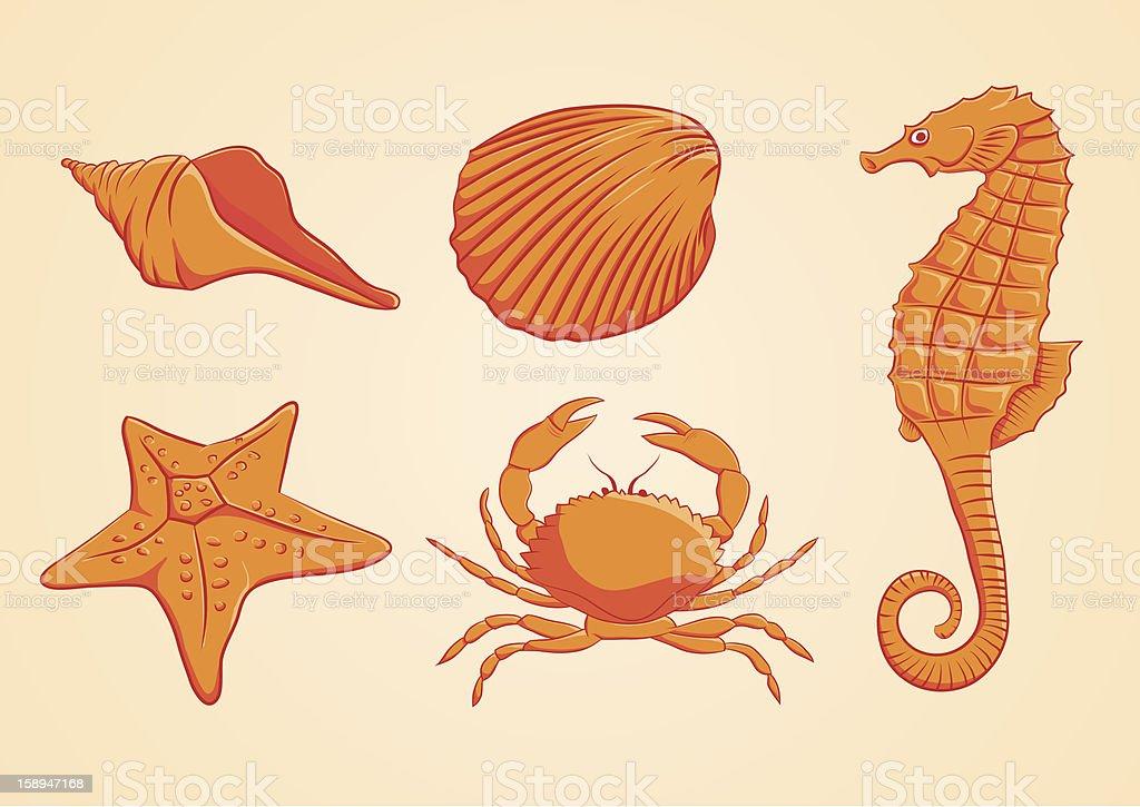 Sea Animal Orange vector art illustration