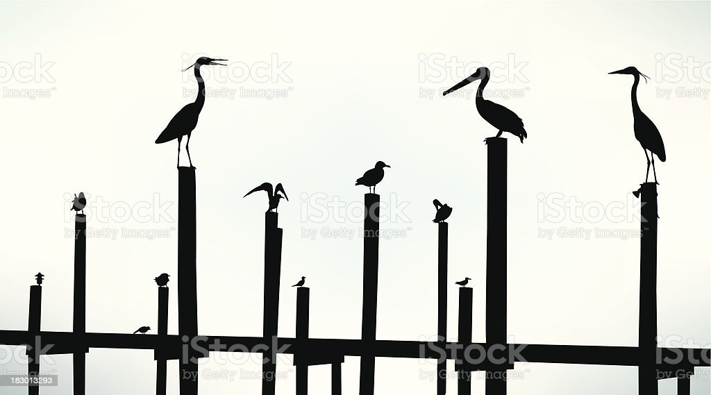 Sea Birds, Pelican, Seagull, Crane Background vector art illustration