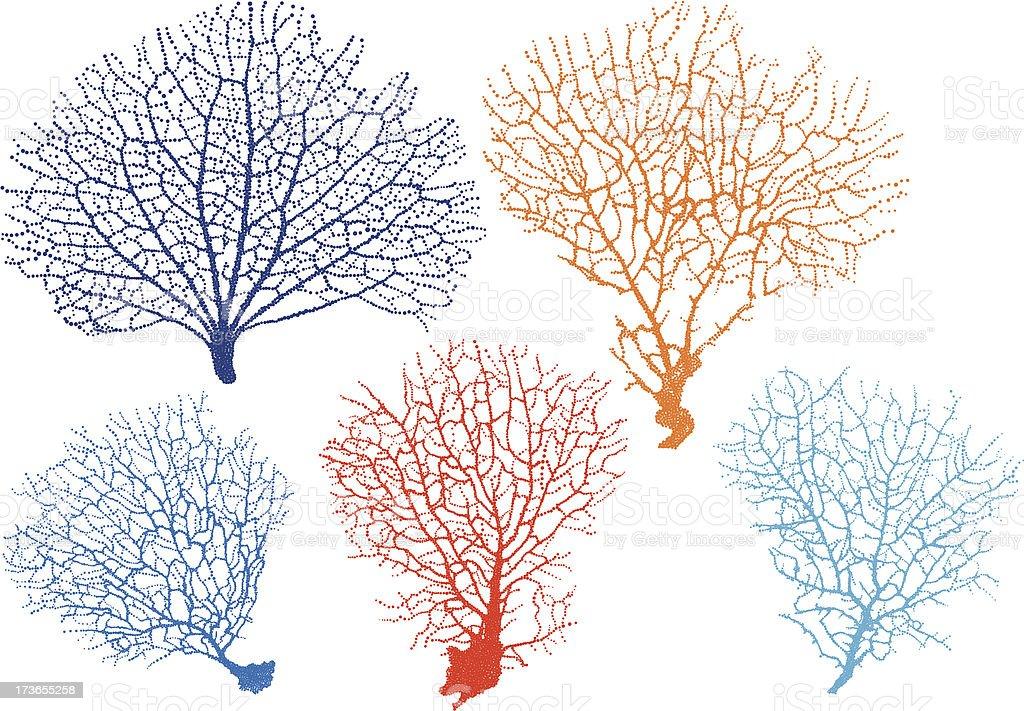 sea fan corals, vector vector art illustration