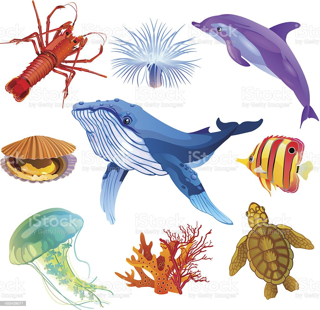Sea fauna vector art illustration