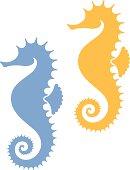 Sea horse illustration on white background