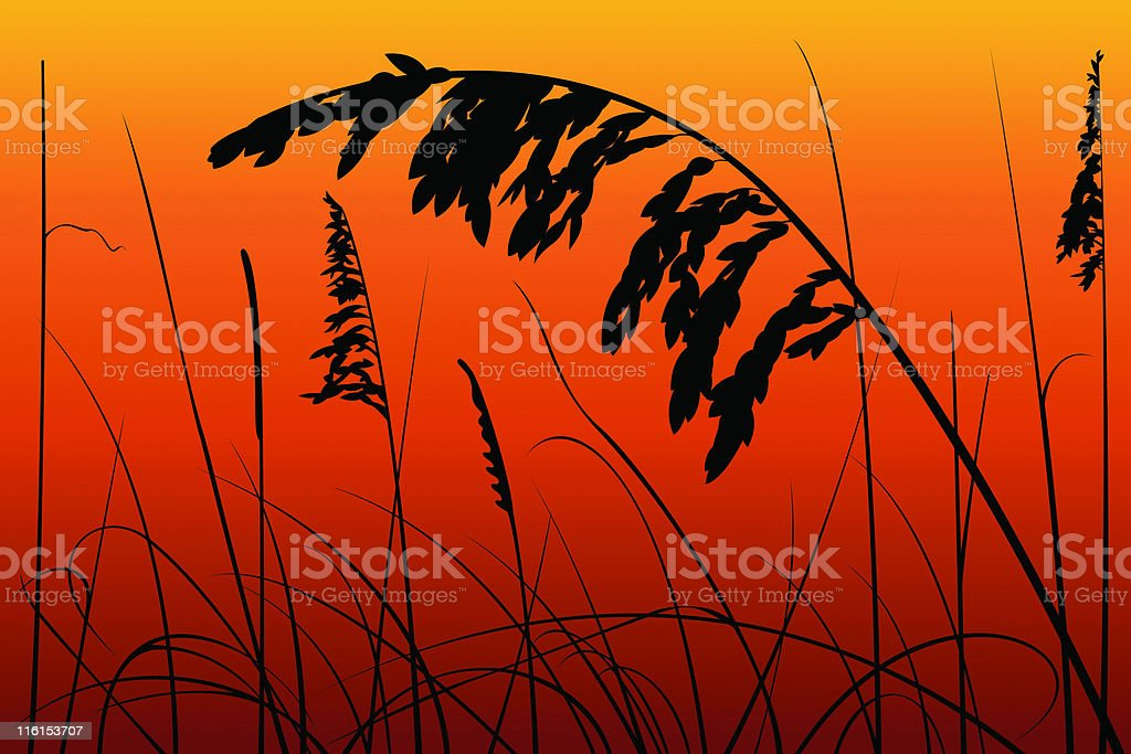 Sea Oats and Reeds on a Sunset vector art illustration