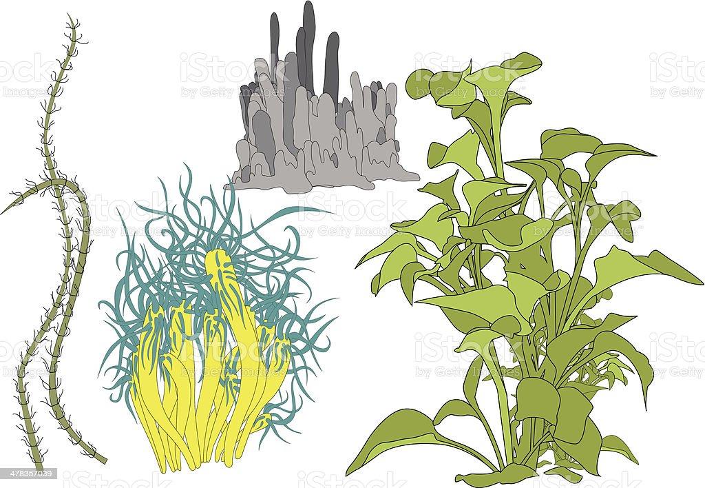 Sea plant vector art illustration
