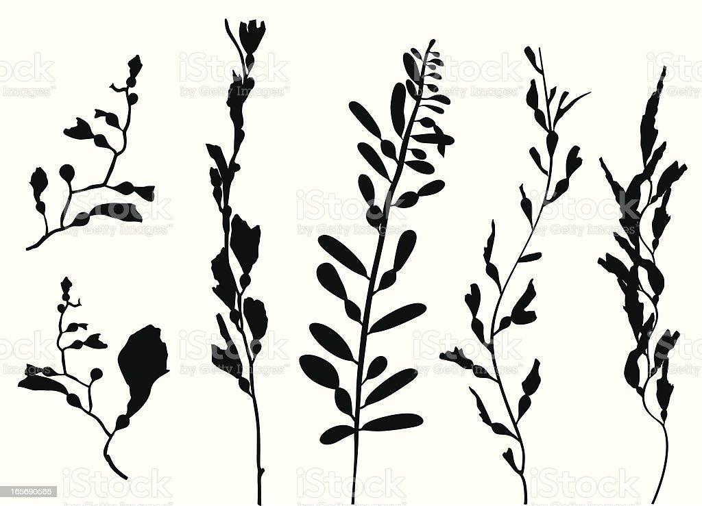 Sea Plants Vector Silhouette vector art illustration