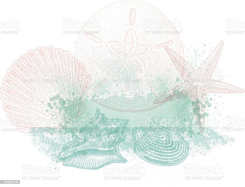 Sea Shell Background Design vector art illustration