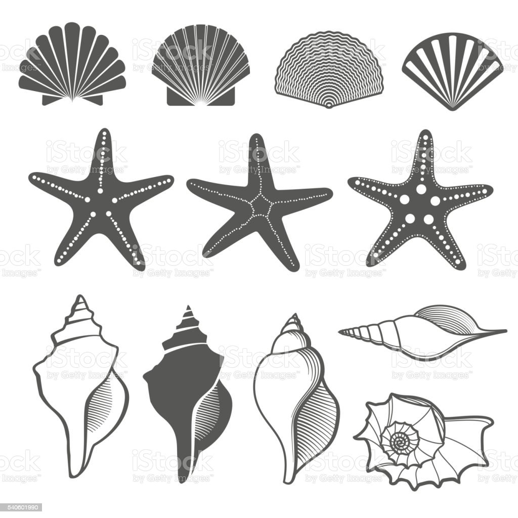 Sea shells and starfish vector set vector art illustration