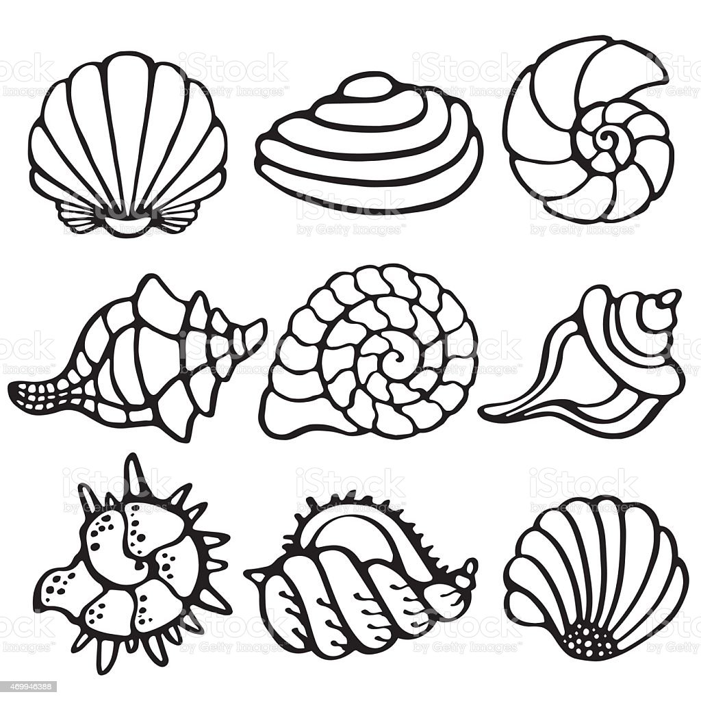 Sea shells icon set isolated on a white background vector art illustration