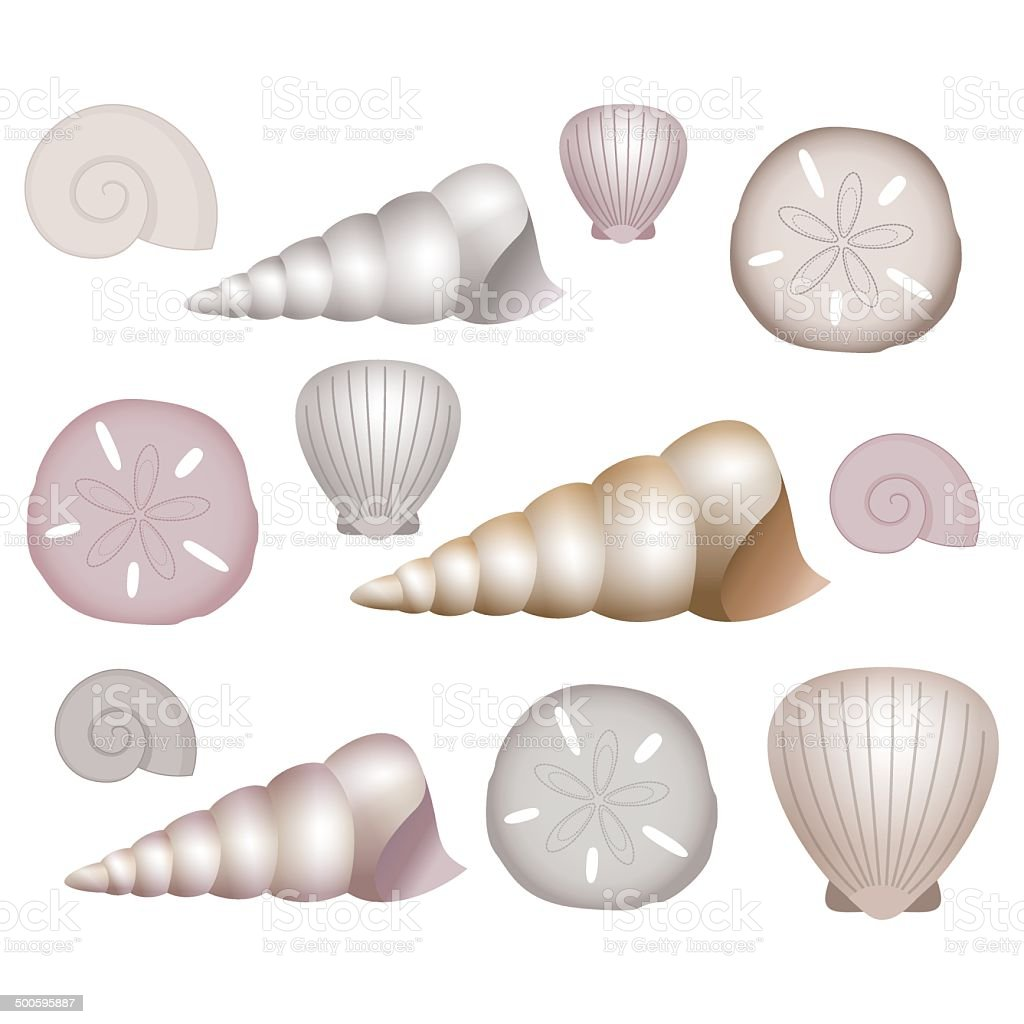 Sea Shells Illustrations. vector art illustration