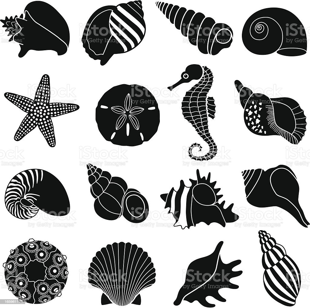 sea shells vector art illustration