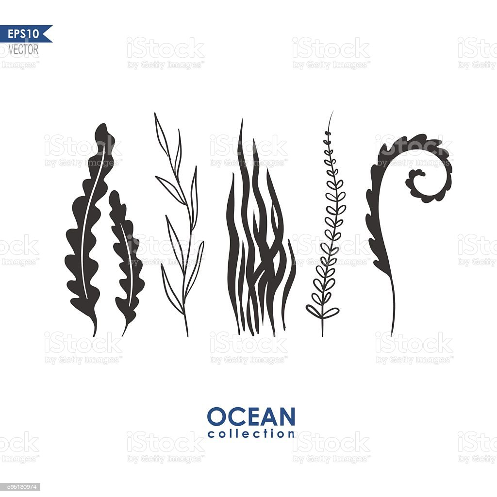 sea weed and water plants vector art illustration
