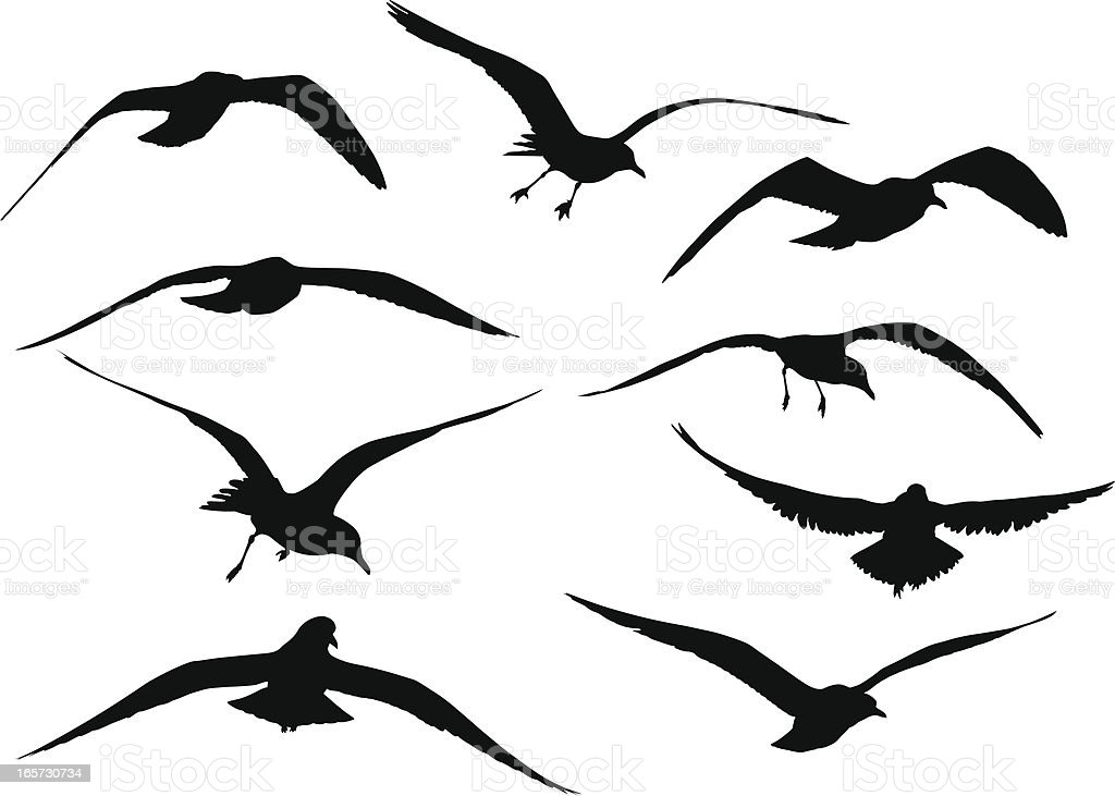 Seagull Silhouettes royalty-free stock vector art