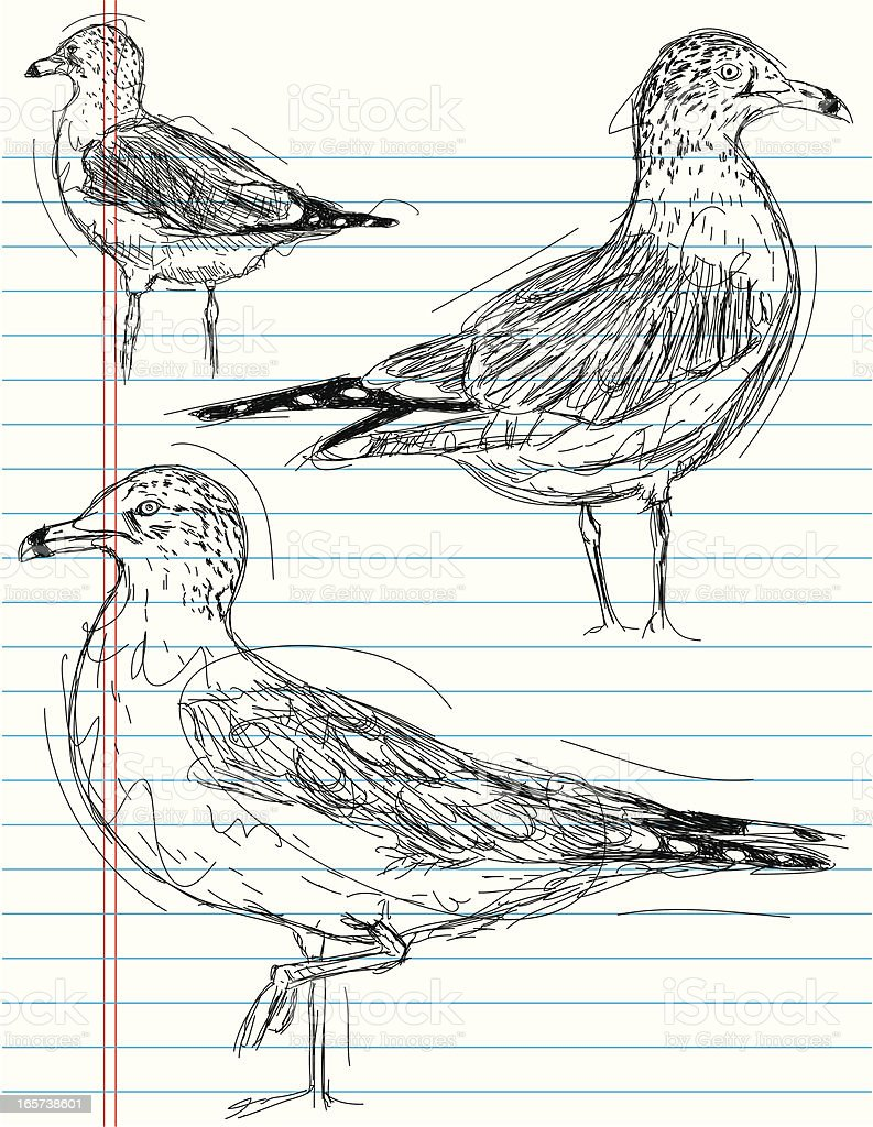seagull sketches royalty-free stock vector art
