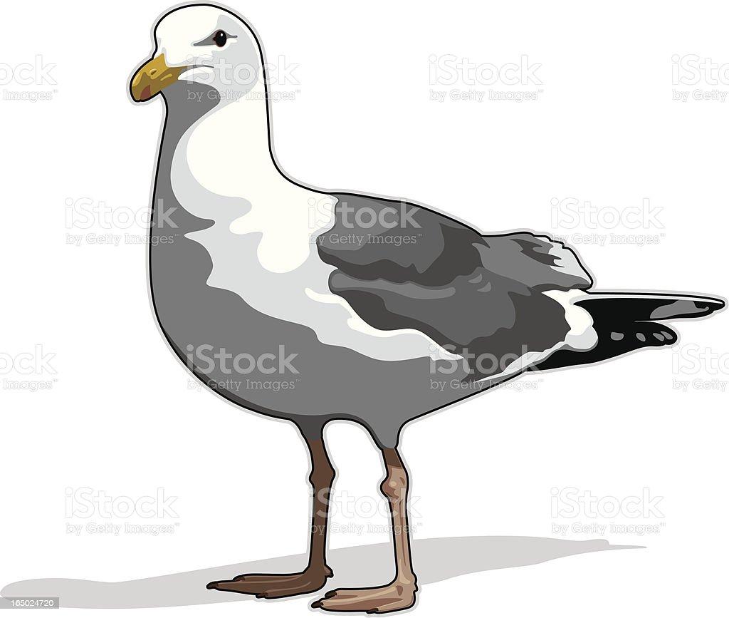 Seagull (vector) royalty-free stock vector art
