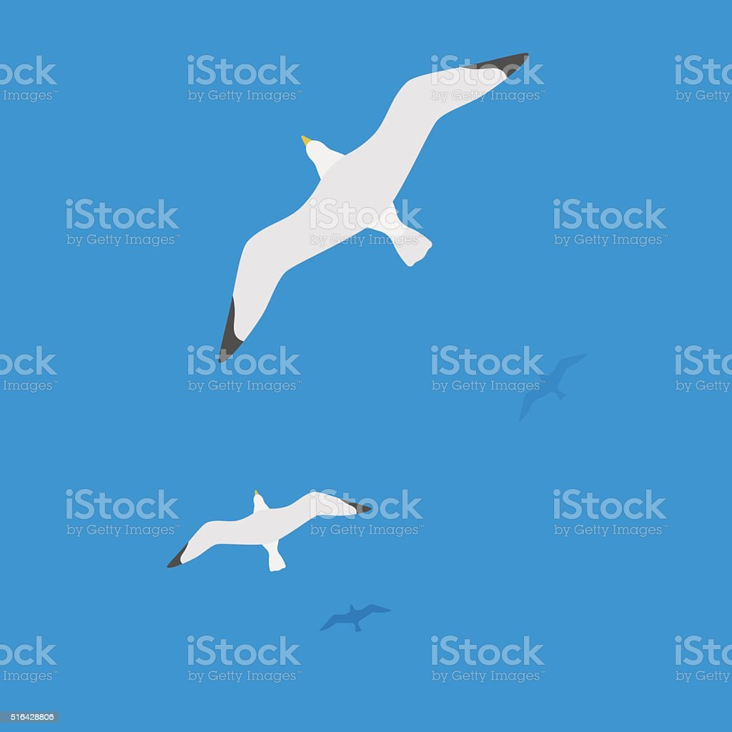 Seagulls flying on water, the flight of white birds on the blue sea....