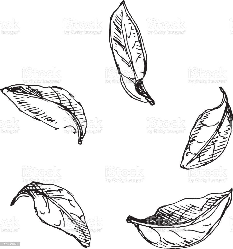 Seamless background pattern of leaves. vector art illustration