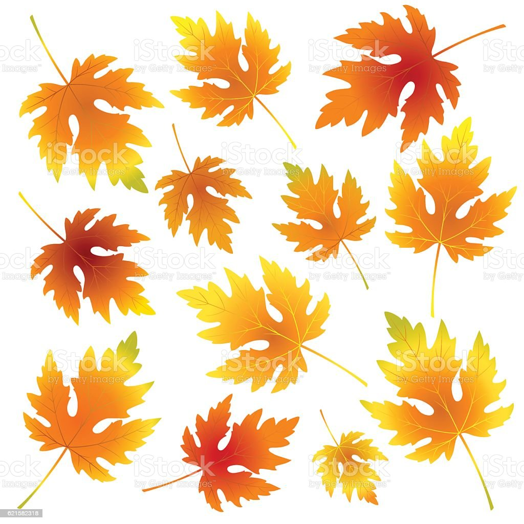 Seamless fall ornamental vector pattern with maple leaves on white. vector art illustration