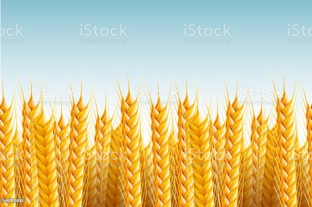 Seamless Field Background royalty-free stock vector art
