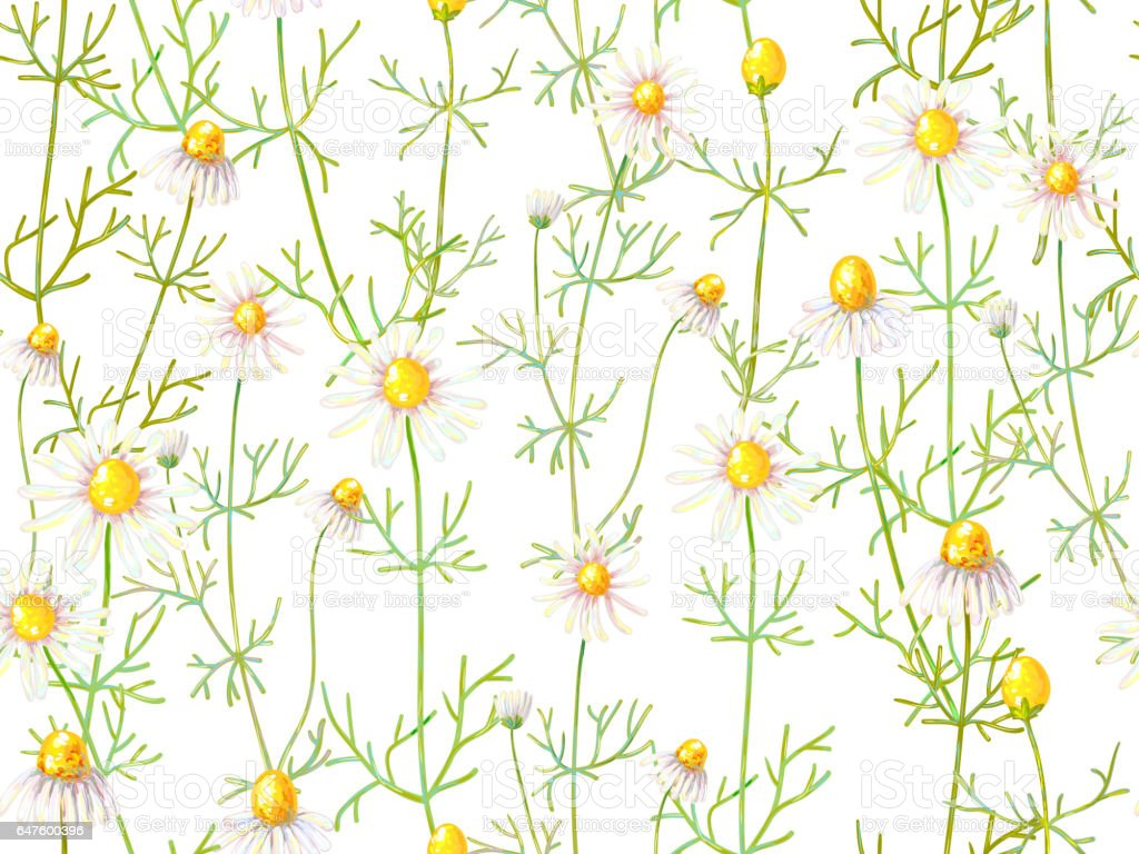 Seamless floral pattern with chamomile flowers. Summer background. Herbal medicine. Vector illustration. Perfect for wallpapers, pattern fills, web page backgrounds, surface textures, textile vector art illustration