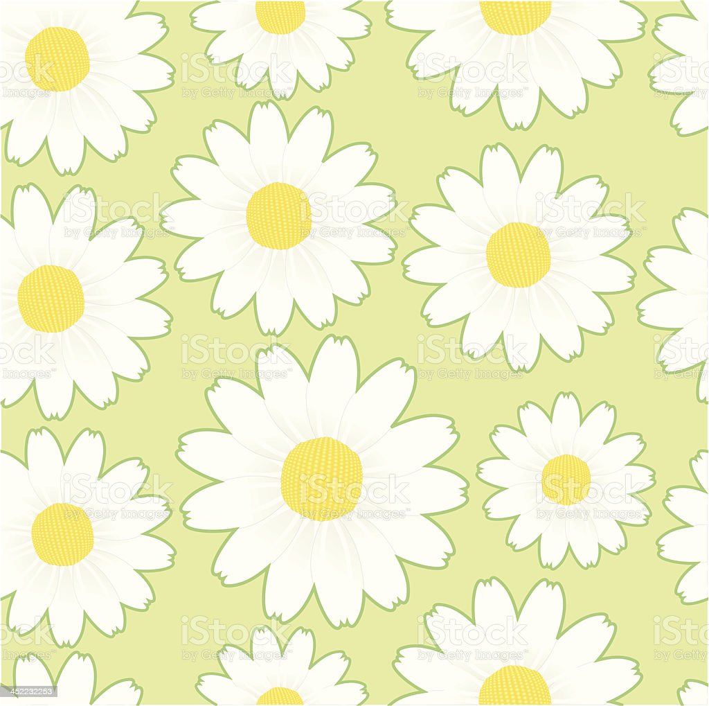 seamless pattern: margueritte chamomile lightgreenbg. royalty-free stock vector art