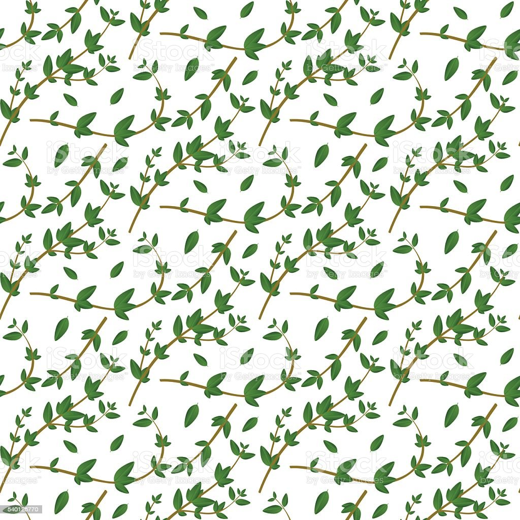 Seamless pattern with evergreen herb. Thyme branch and  leaves vector art illustration