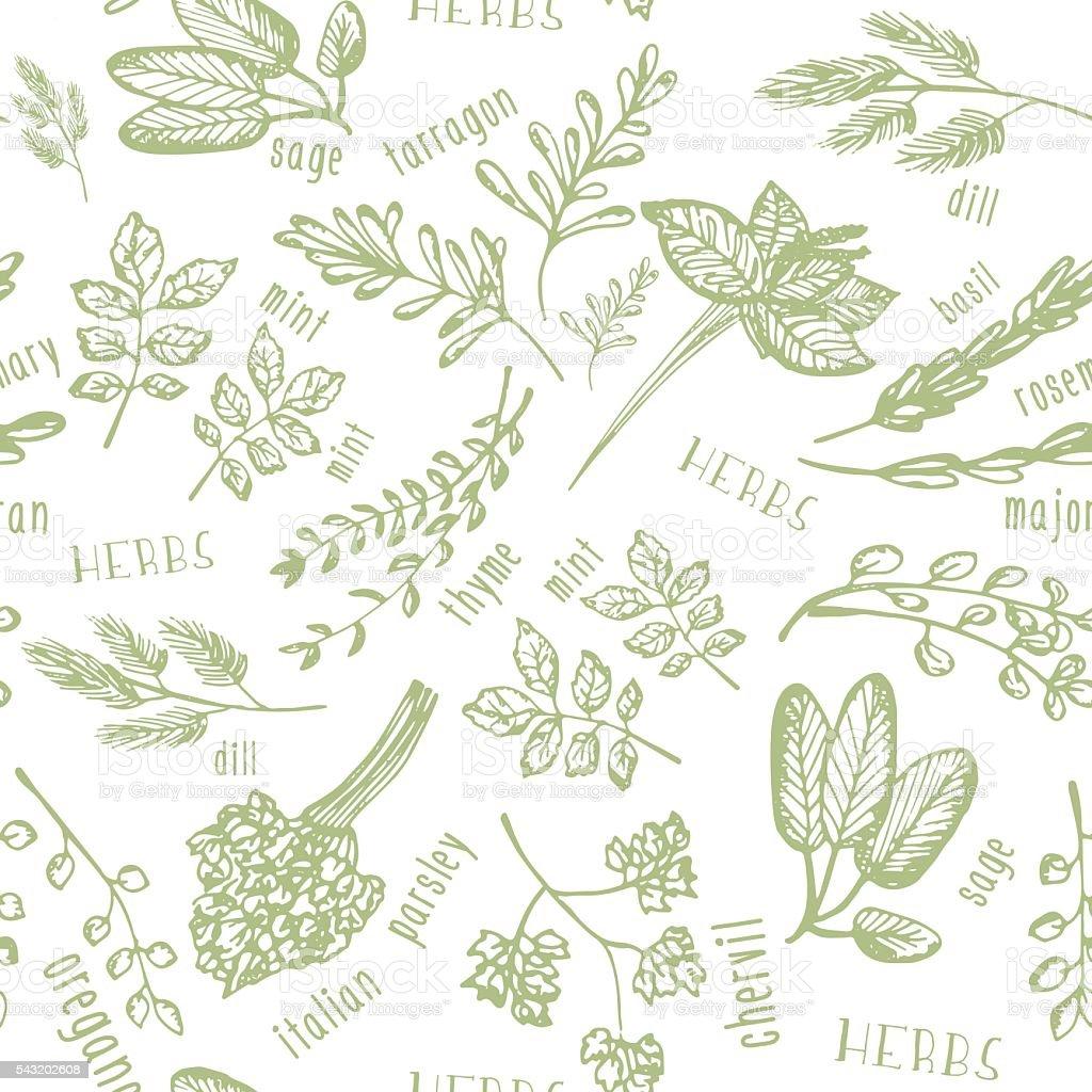 motivo senza interruzioni con erbe piccanti disegnato a mano libera sfondo cucina cucina illustrazione royalty