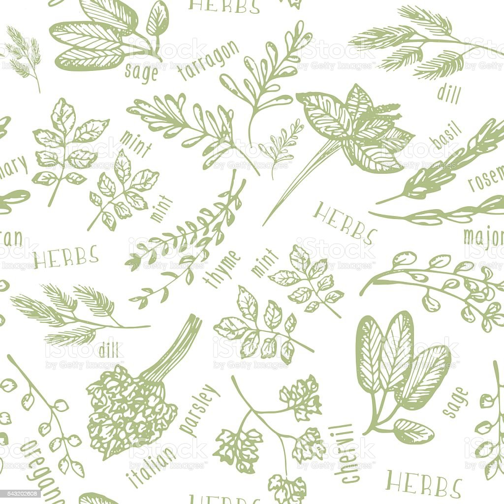 Seamless pattern with hand drawn spicy herbs. Culinary kitchen background vector art illustration