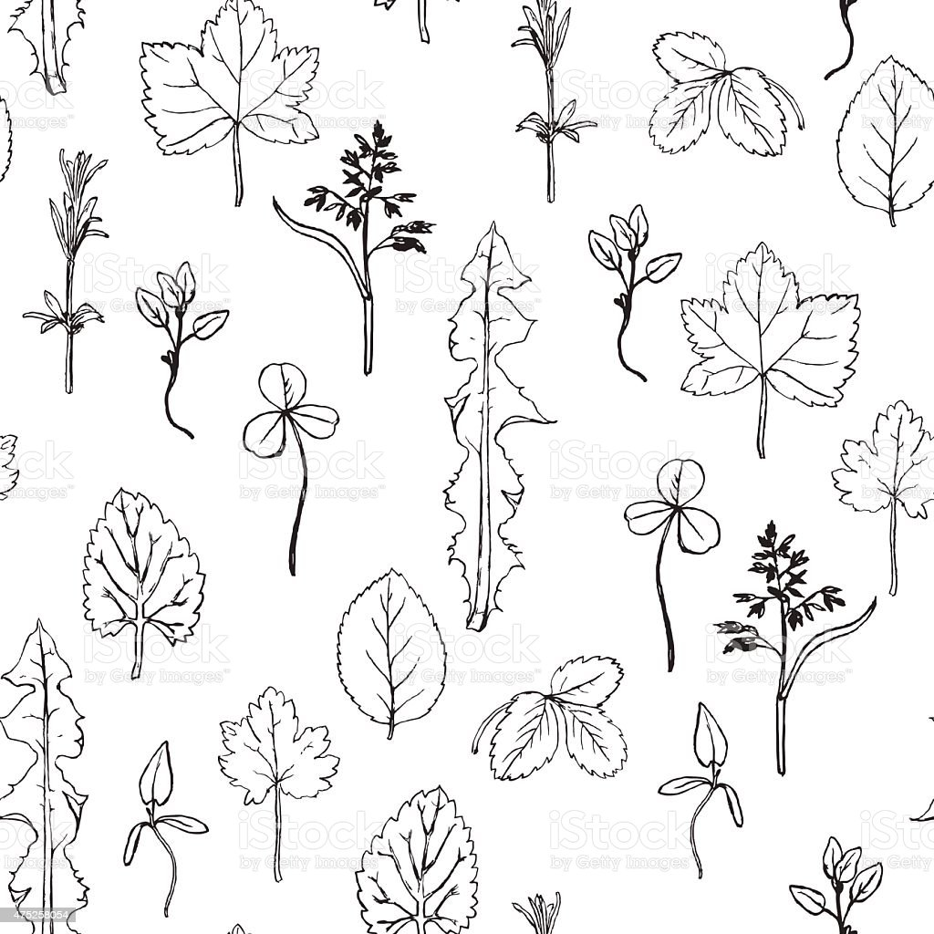 Seamless pattern with herbs and leaves vector art illustration