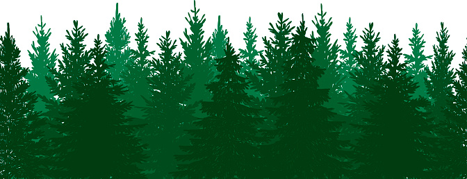 Evergreen Tree Clip Art, Vector Images & Illustrations ...