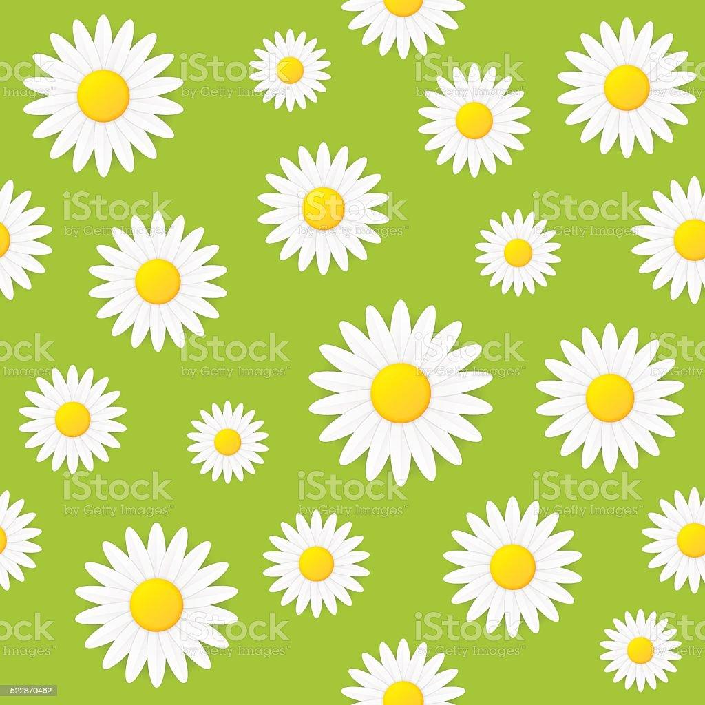 Seamless spring natural daisy flower vector background vector art illustration