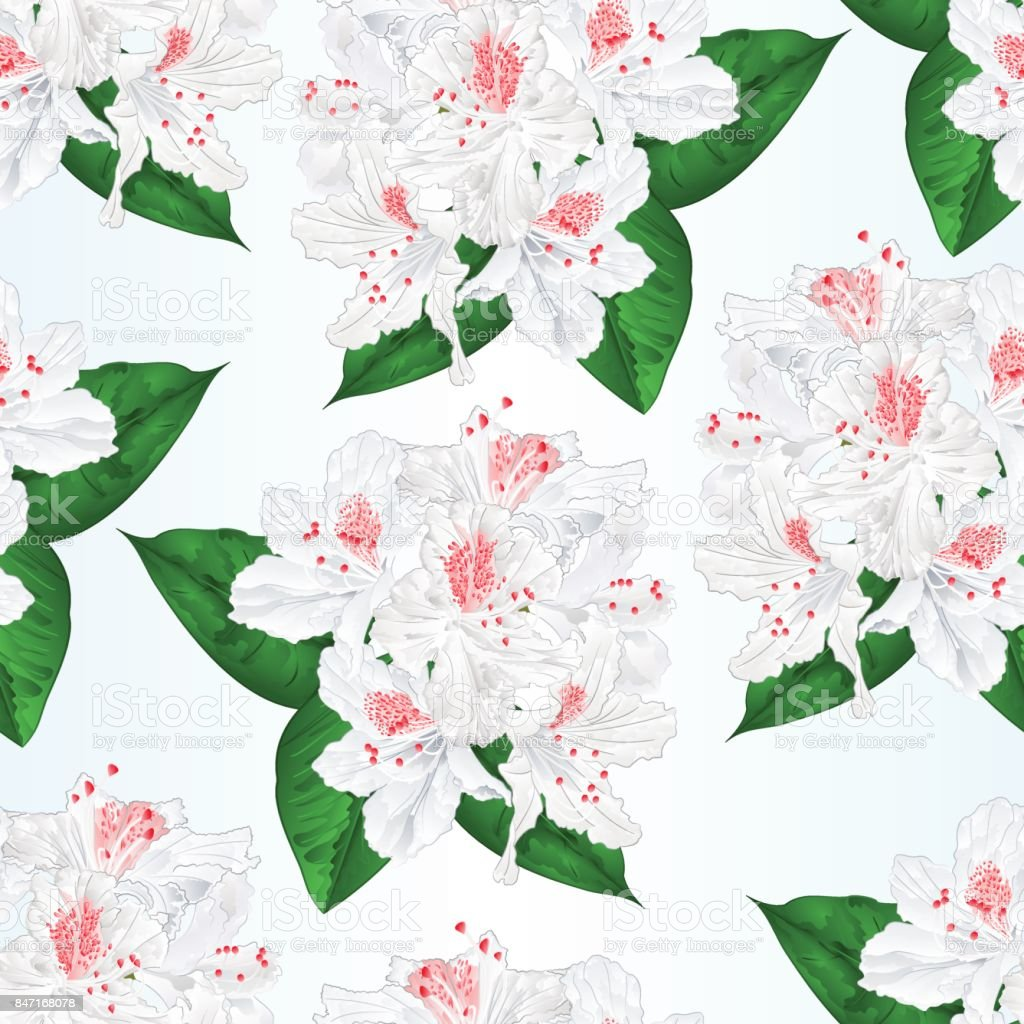 Seamless texture flowers white rhododendron  with  leaves vintage  vector illustration editable vector art illustration