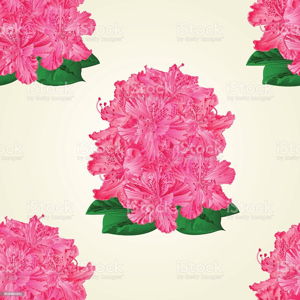 Seamless texture pink rhododendrons vector vector art illustration
