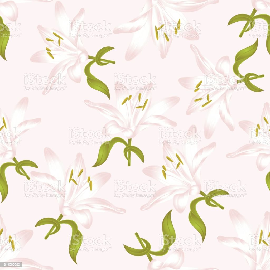 Seamless texture white Lily Lilium candidum, a white flower with leaves  vector illustration editable vector art illustration