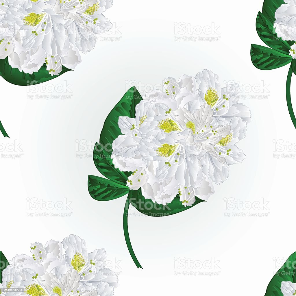 Seamless texture white rhododendron twig vector vector art illustration