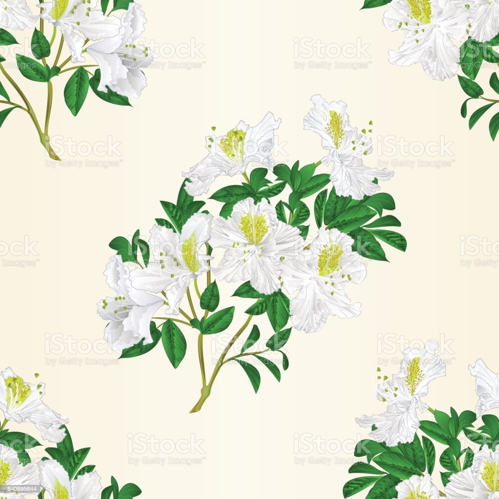 Seamless texture white rhododendron twig with flowers and leaves mountain shrub vintage vector editable illustration vector art illustration