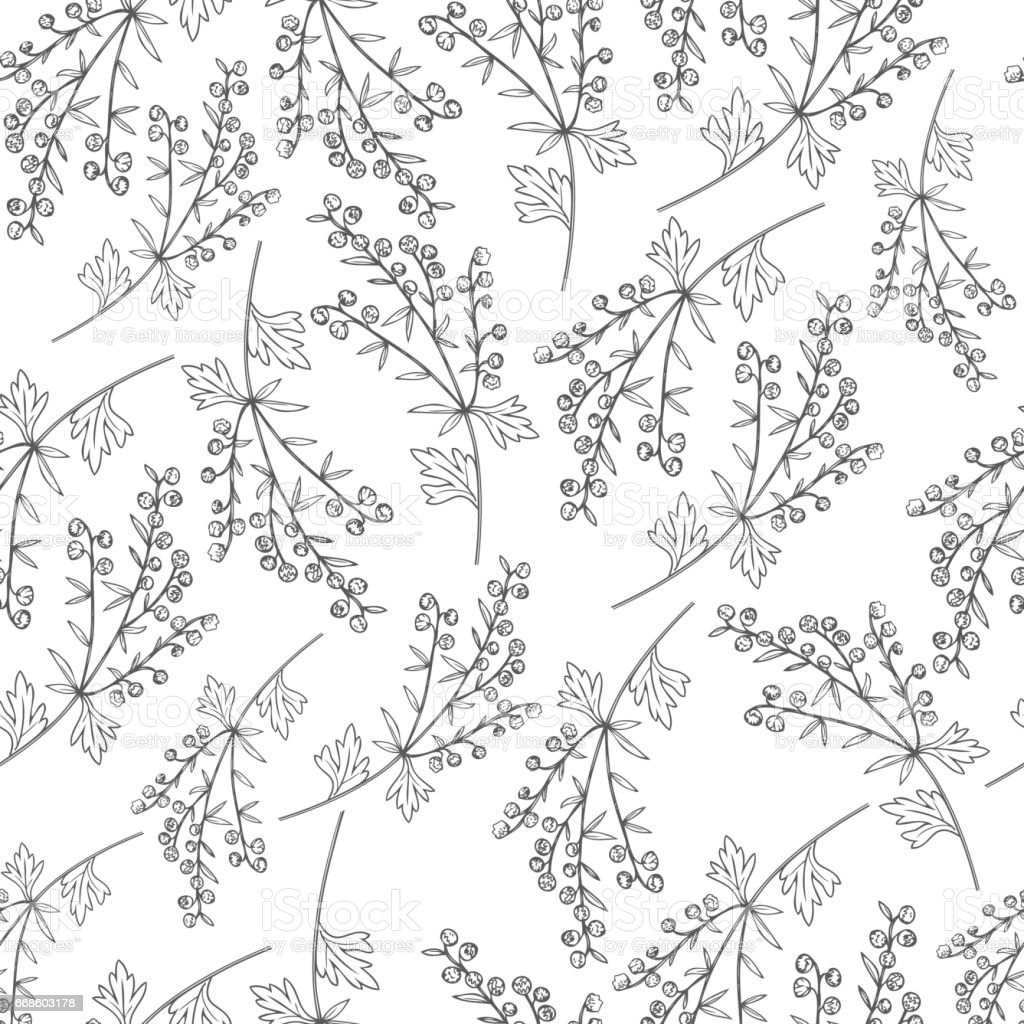 Seamless vector pattern Artemisia absinthium, wormwood hand drawn vector ink sketch isolated on white Also called absinthium absinthe wormwood, wormwood, common wormwood, Absinthe plant vector art illustration
