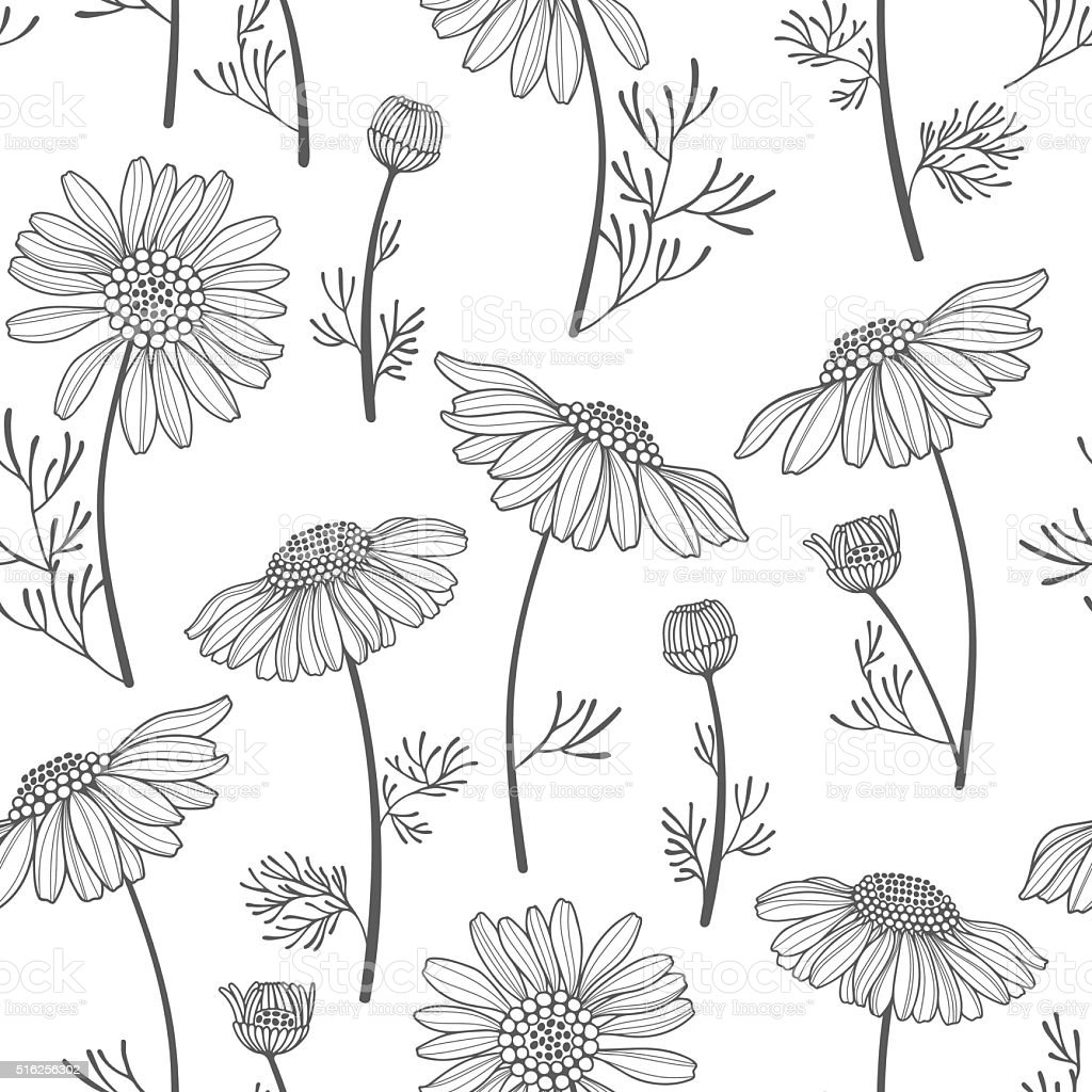 Seamless vector pattern with chamomiles. Hand-drawn floral background. vector art illustration